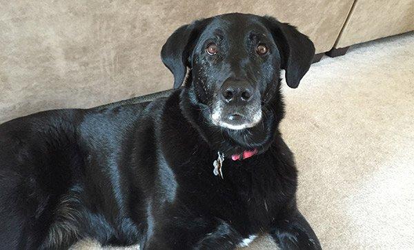 Foster Dog Training