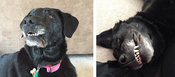 Foster Dog Silla Smile
