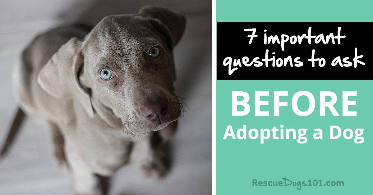 7 important questions to ask before adopting a puppy or dog