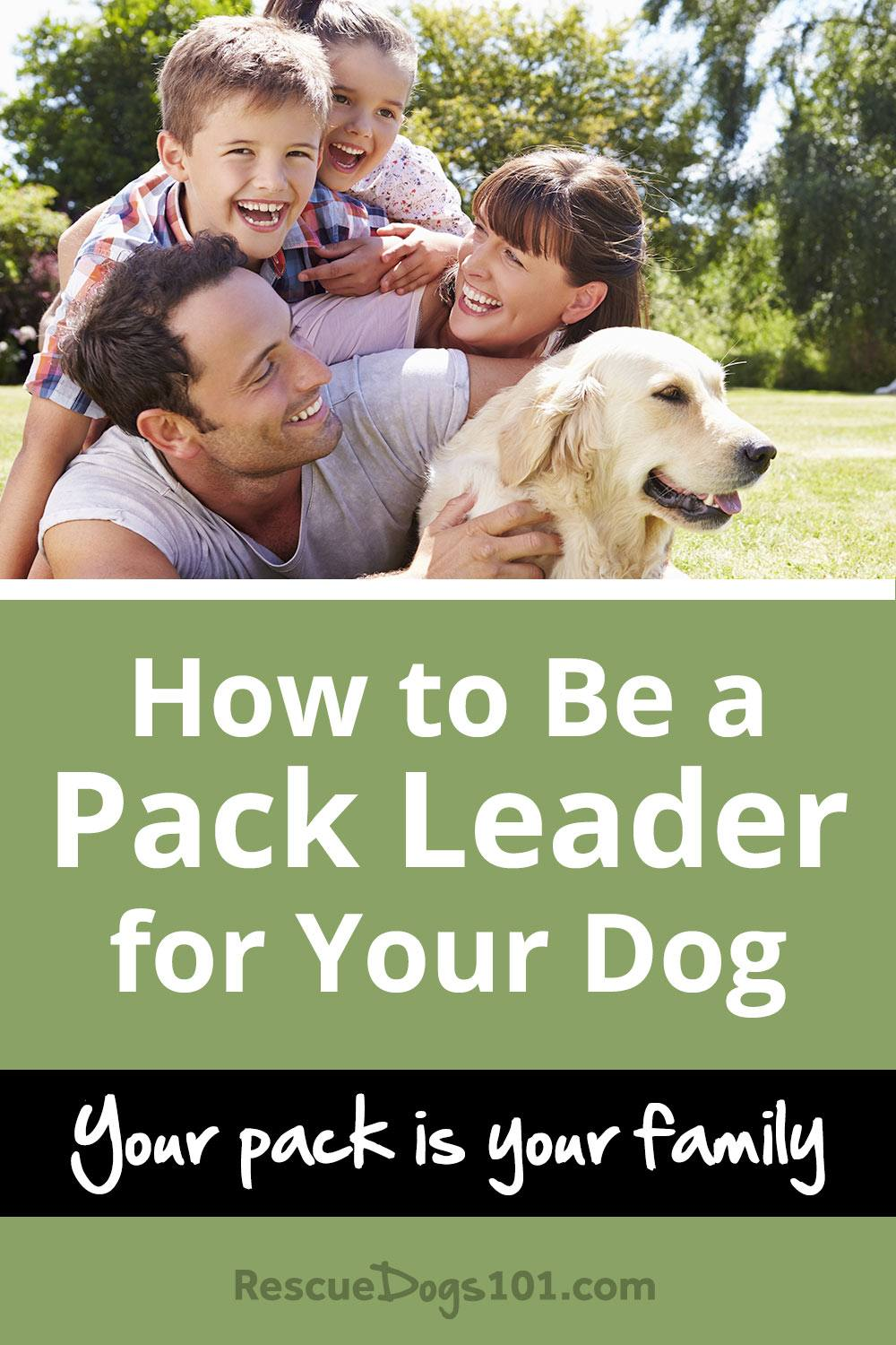 How to Be a Pack Leader for Your Dog, Your Pack is Your Family. Does he listen the FIRST time you ask him to come? If you answered no, you are probably not your dogs pack leader.