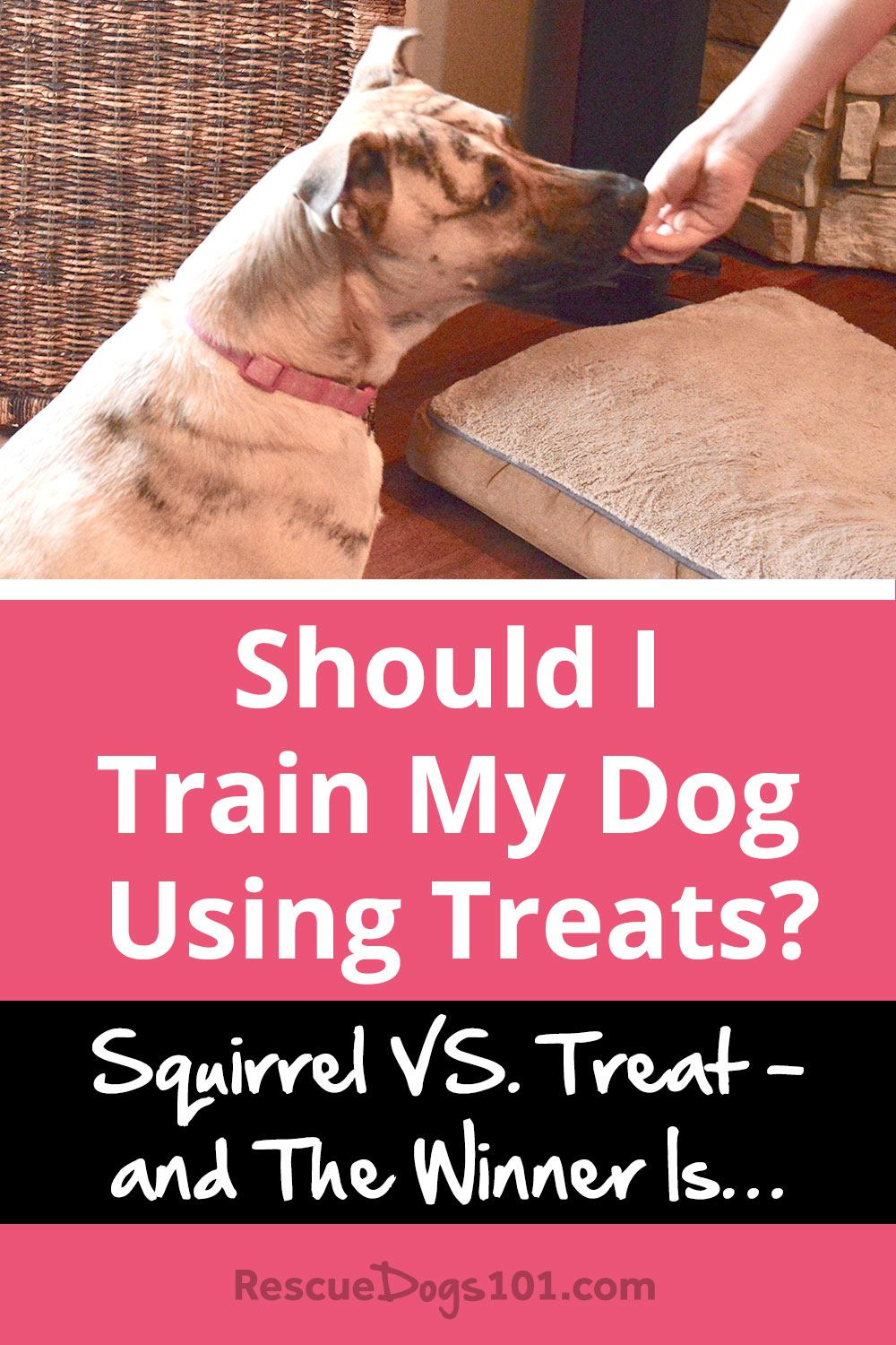 Should I train my dog using treats?