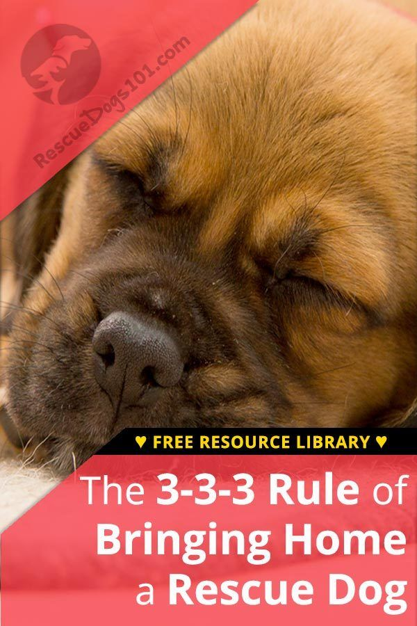 Bringing Rescue Dog Home and the 3-3-3 Rule