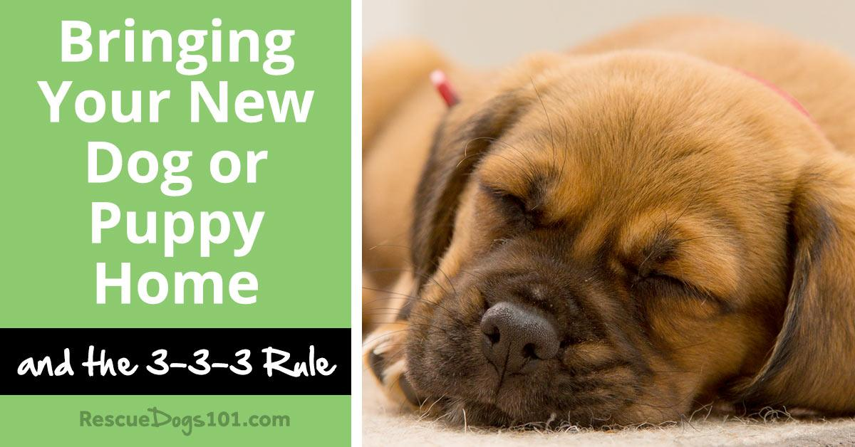 Bringing Your New Dog or Puppy Home and the 3-3-3 Rule