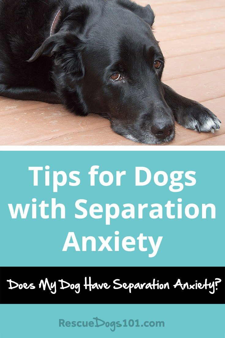 Solutions For Dog Separation Anxiety Rescue Dogs 101