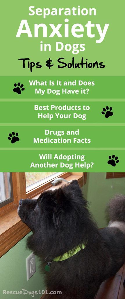 Rescue Dog Separation Anxiety Solutions