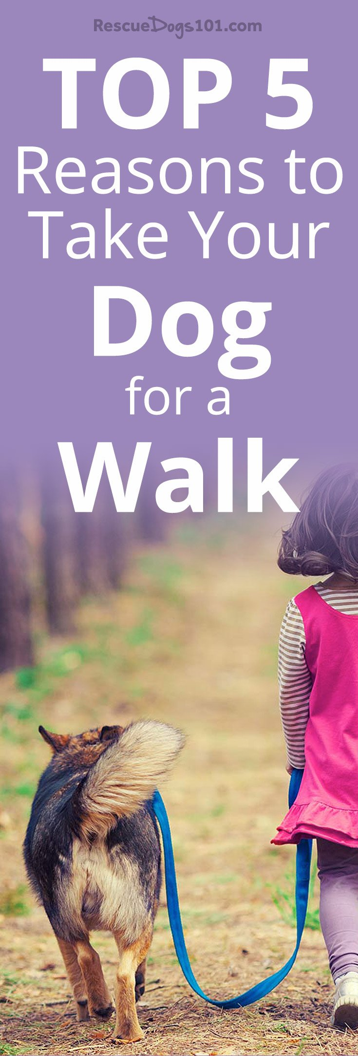 Top 5 Reasons to Take Your Dog for a Walk