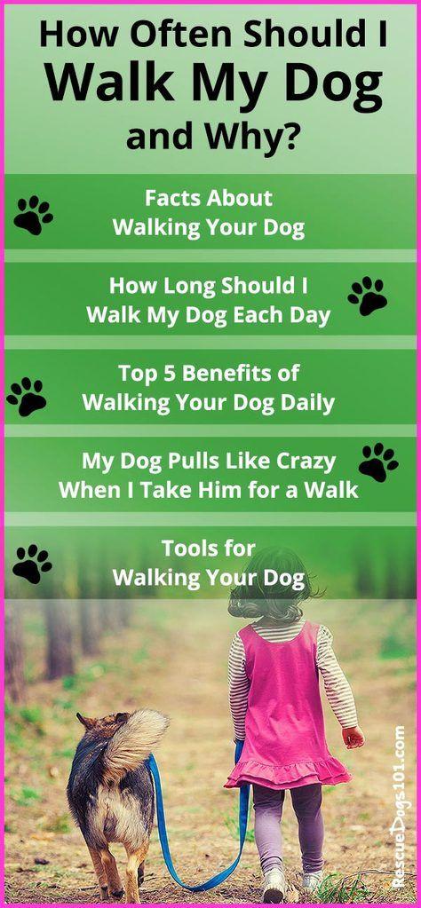 Dog walking tips, Schedule, Training
