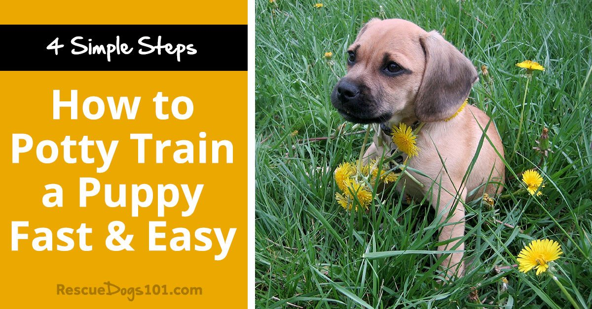 How To Potty Train A Puppy Fast Amp Easy Rescue Dogs 101