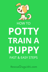 How to Potty train a puppy, fast and easy steps