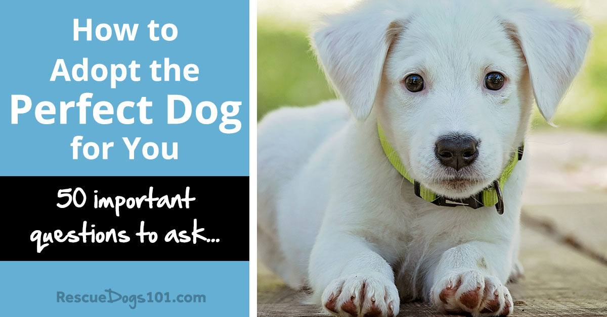 How to Adopt the Perfect Dog for You