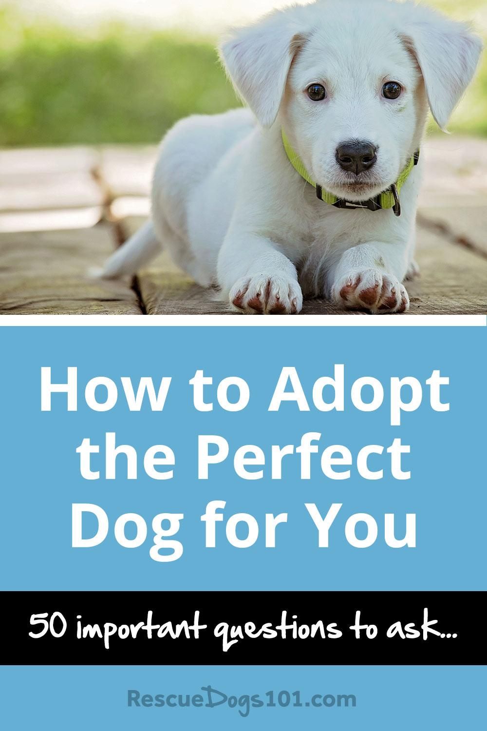 Adopting A Dog How To Make It Feel At Home