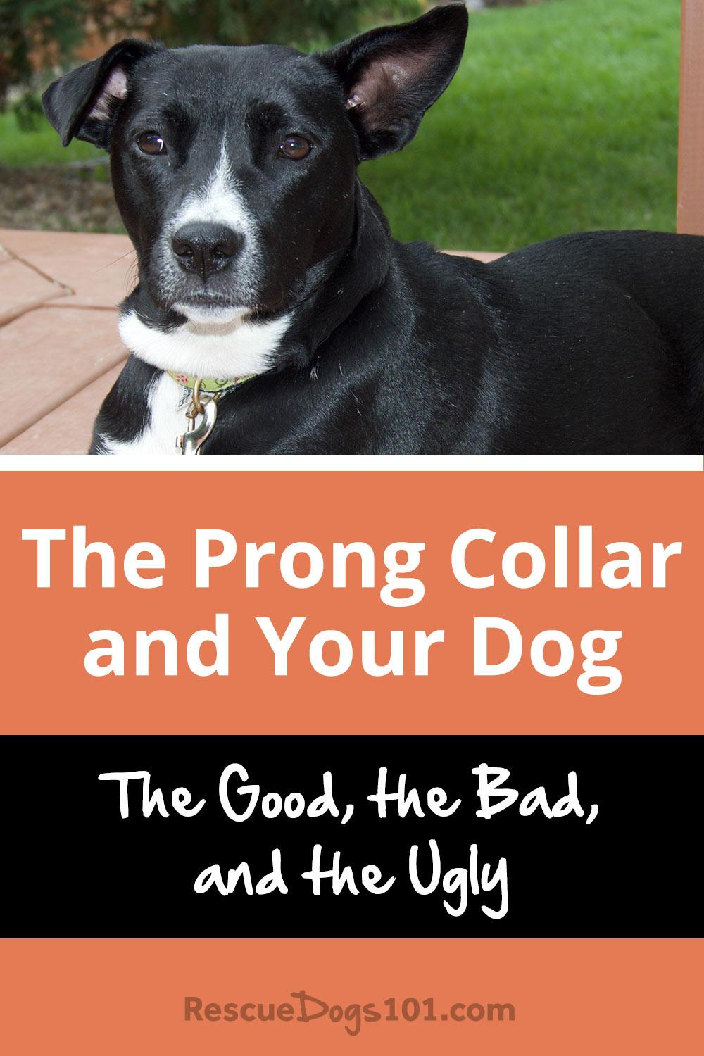 Are E Collars Bad For Dogs