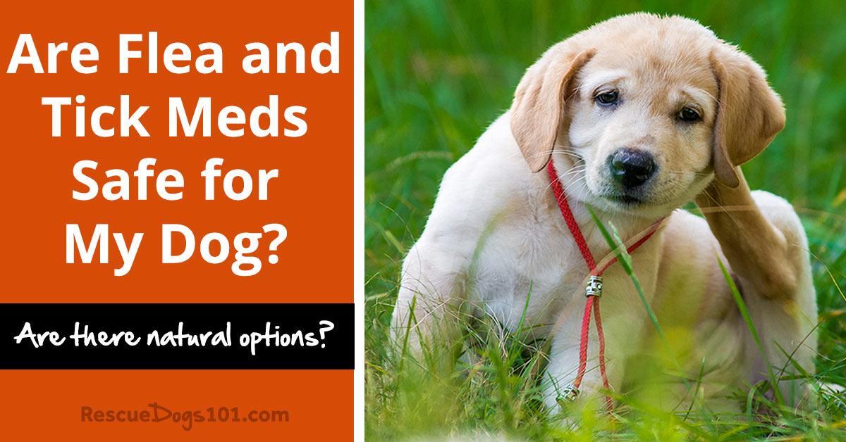 Best Flea And Tick Meds For Dogs