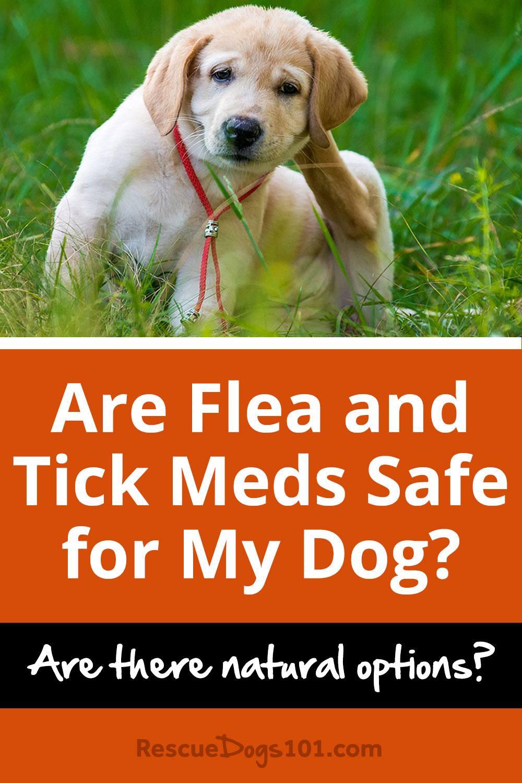 Natural Flea Medication For Dogs