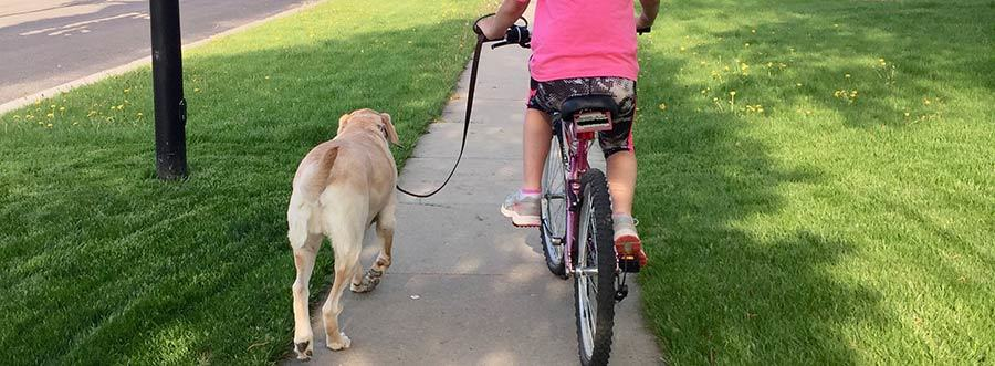 The prong collar made it possible for my kid to ride her bike with her dog