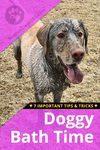 Dog Bath time tips and tricks