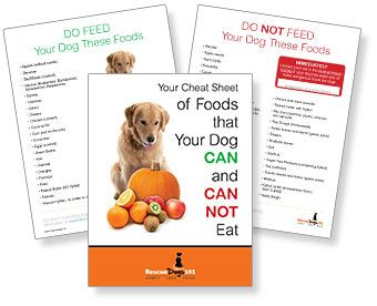 can I feed my dog people food - Rescue Dogs 101