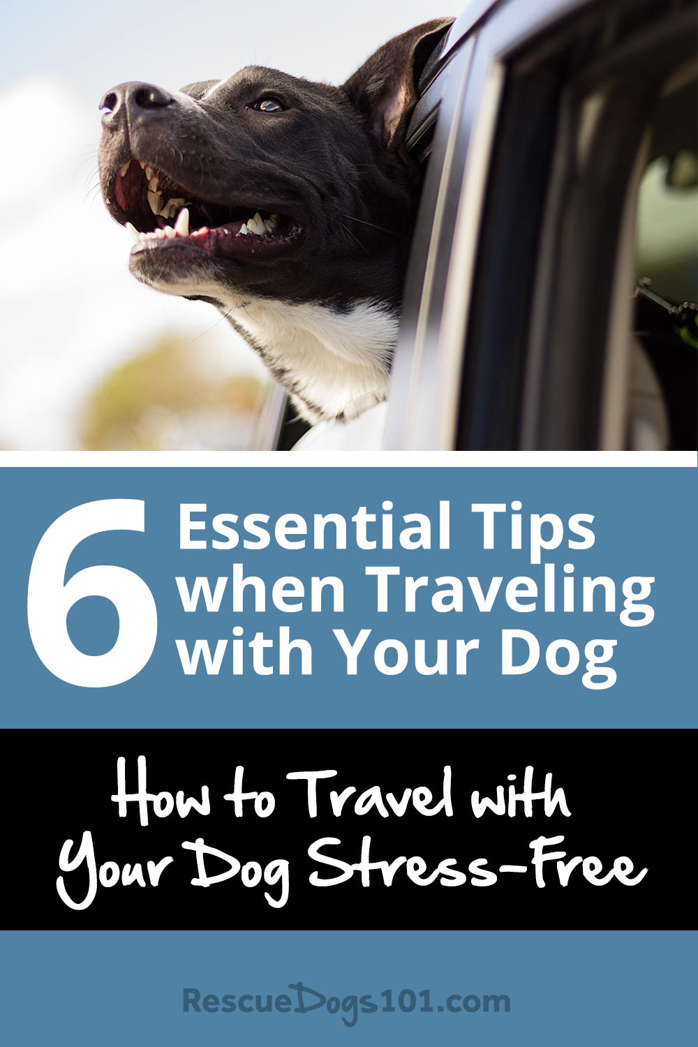 6 Essential Tips when Traveling with Your Dog