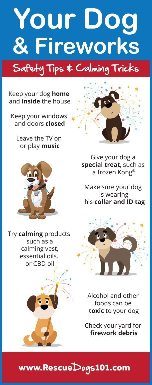 Dogs and Firework Safety Tips and Calming Tricks