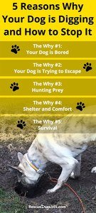 How to Stop My Dog-Digging