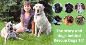 The story and dogs behind Rescue Dogs 101