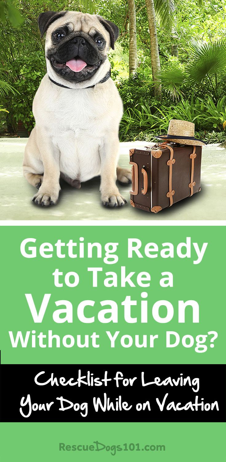 Checklist for Leaving Your Dog While on Vacation