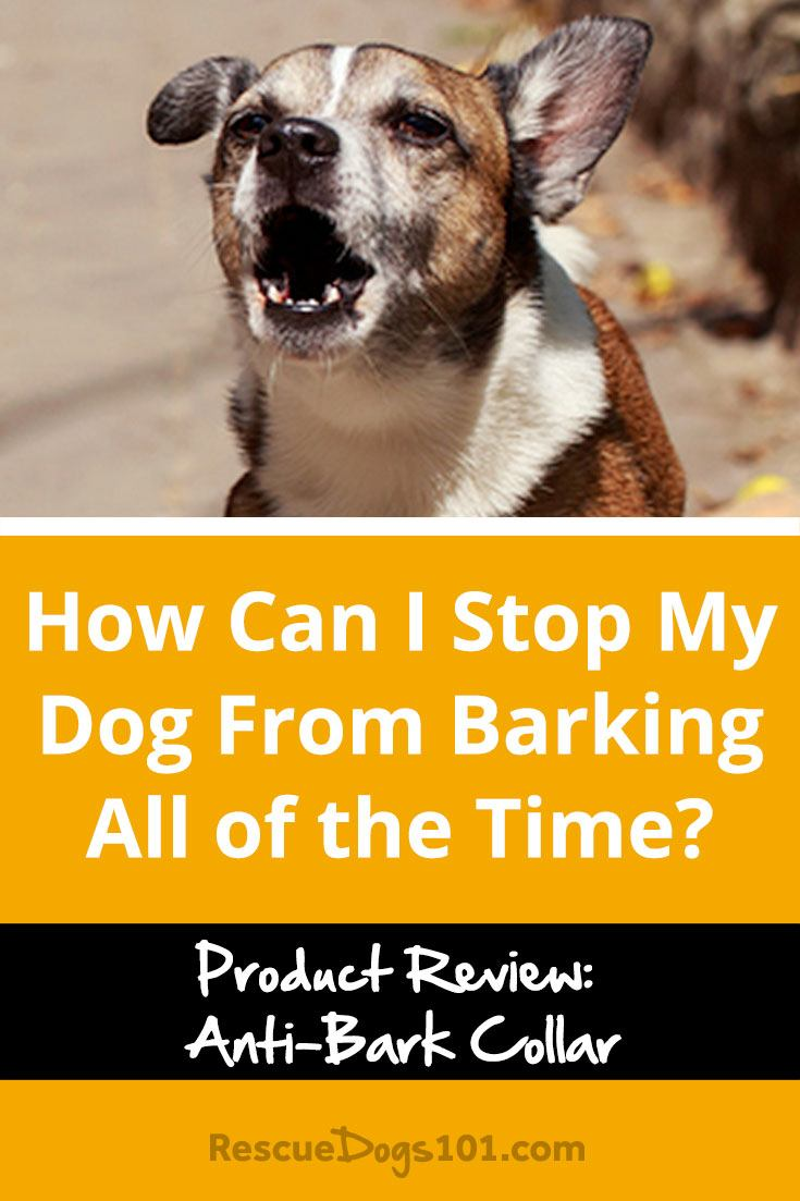How Can I Stop My Dog From Barking All of the Time? Product Review: PetSafe Anti-Bark Citronella Spray Collar #dogtrainingtips #doggies #doglovers #dog #dogtraining  #dogadopt #dogadoption #adoptadog #dogstuff #puppytraining #puppytrainer #dogtrainer #cuteanimals #puppy #puppylove #dogtrainingtools #rescuedogs101
