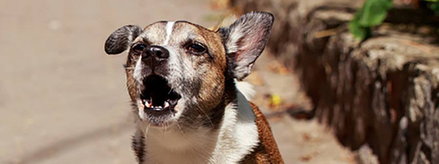 How Can I Stop My Dog From Barking All of the Time?