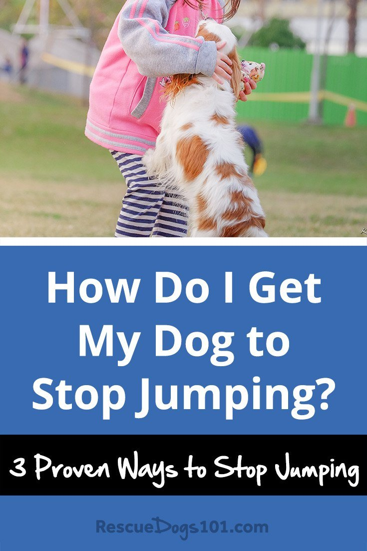 how do i get my dog to stop jumping   rescue dogs 101