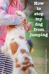 dog jumping on girl