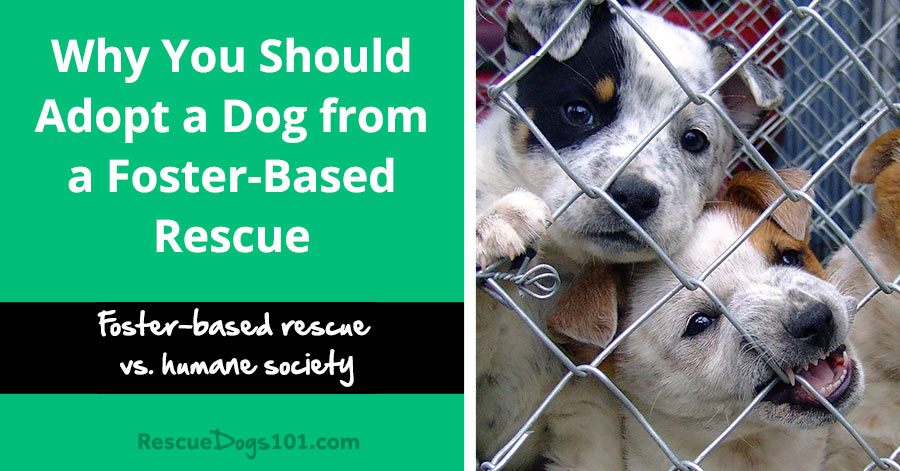 Why You Should Adopt A Dog From A Foster Based Rescue