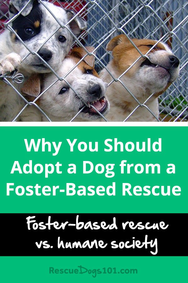 Why You Should Adopt a Dog from a Foster-Based Rescue