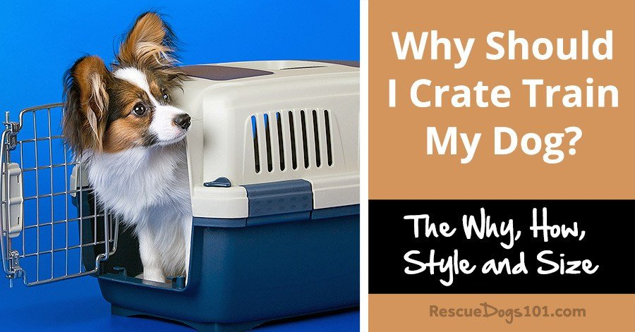 Why Should I Crate Train My Dog?