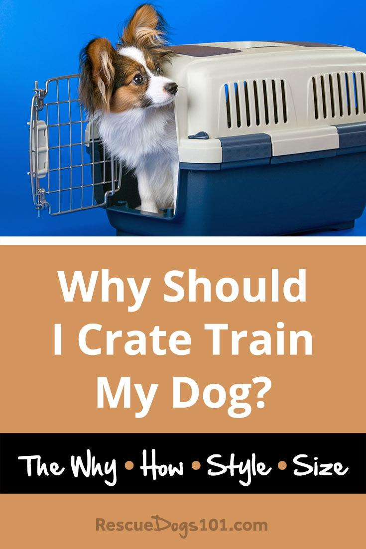Should You Crate Your Dog All Day