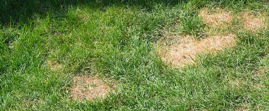 5 Simple Ways to Stop Your Dog's Pee from Killing Your Grass