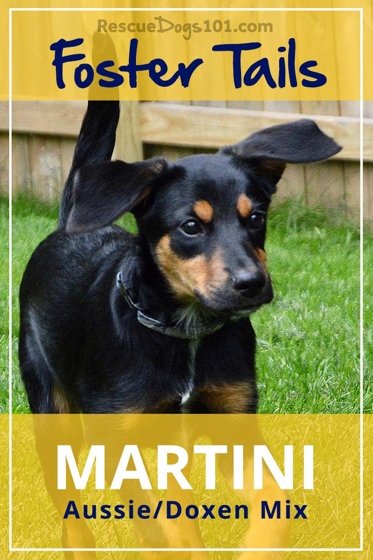 Our foster dog, Martini, found her forever home! Yeah, I'm so happy for her and her new family.