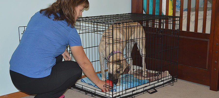 How And Why Crate Train Your Dog In 3 Easy Steps Rescue Dogs 101