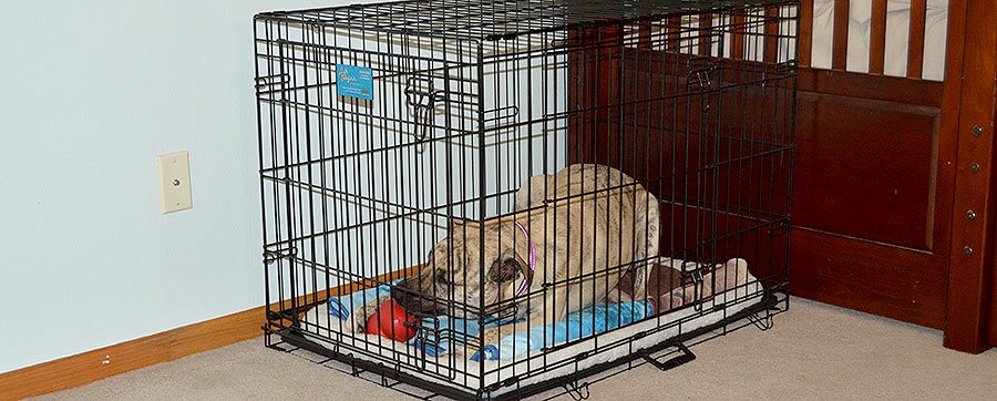 How to Crate Train Your Dog or Puppy in 3 Easy Steps