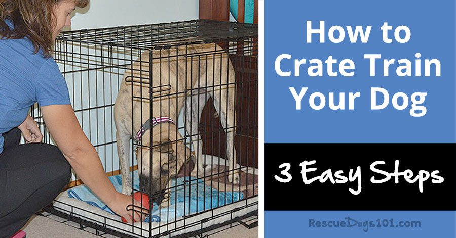 4 simple steps to potty train your puppy fast easy