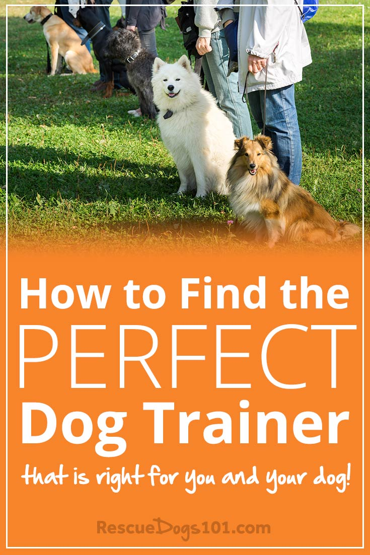 How to Find the Perfect Dog Trainer that is Right for You and Your Dog