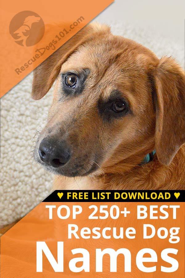 top 250 best dog names dog