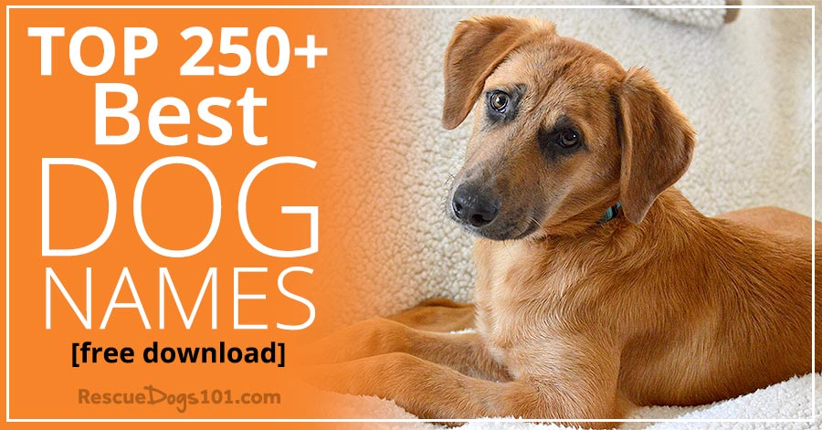 top 250 best dog names for your dog rescue dogs 101