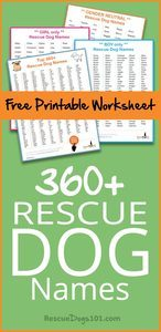 Top 360+ Best Dog Names for Your Rescue Dog