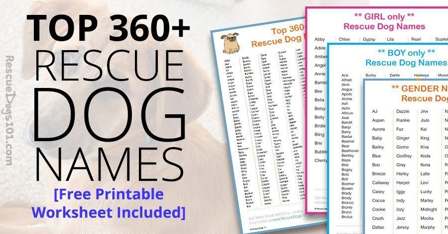 Top 360 Best Dog Names For Your Rescue Dog Rescue Dogs 101