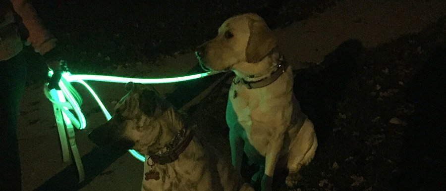LED Dog Leash Walk