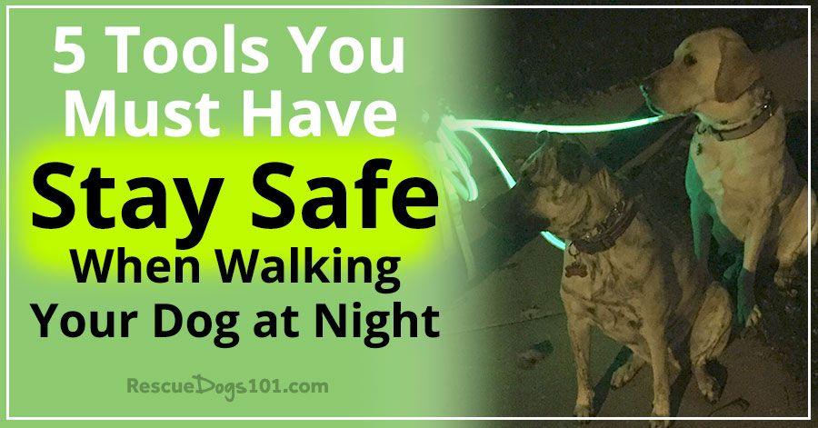 Dog Walking At Night Amazon