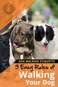 5 Rules of Walking your Dog Etiquette