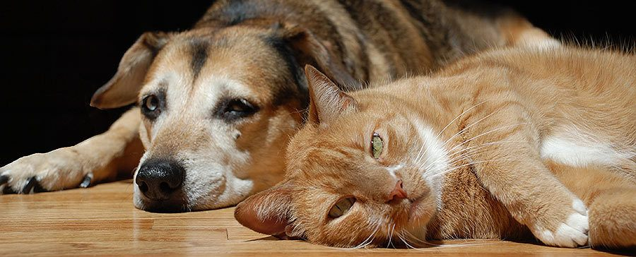 Dog and cat on floor - Bringing Home a Shelter Dog and Other Pets