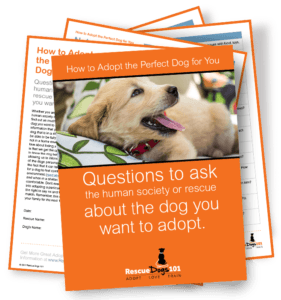 Dog Rescue Interview Questions