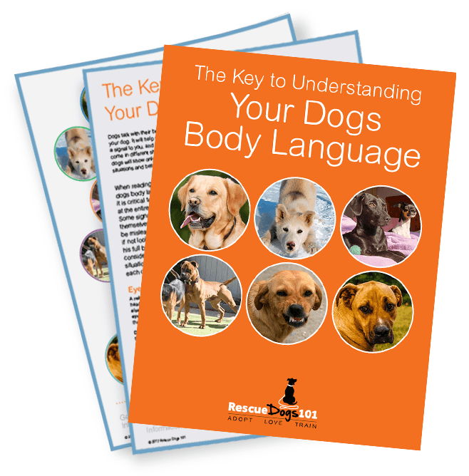 the key to understanding your dogs body language